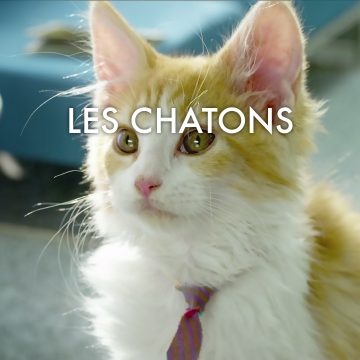 Chatons Title 1